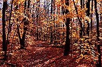 /images/133/1997-10-bruce-trail-fall1.jpg - #00063: Bruce Trail in fall … Oct 1997 -- Bruce Trail, Halton, Ontario.Canada