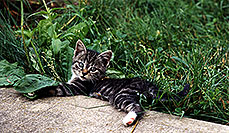 /images/133/1998-07-ohio-kitten-grass.jpg - #00099: stray cats moving in … Akron, Ohio … July 1998 -- Akron, Ohio