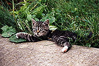 /images/133/1998-07-ohio-kitten-grass2.jpg - #00100: stray cats moving in … Akron, Ohio … July 1998 -- Akron, Ohio