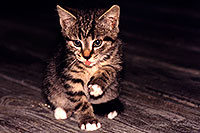 /images/133/1998-07-ohio-kitten-night1.jpg - #00101: stray cats moving in … Akron, Ohio … July 1998 -- Akron, Ohio