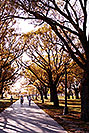 /images/133/1998-08-toronto-lake-tree-walk-v.jpg - #00139: fall in Toronto … August 1998 -- Toronto, Ontario.Canada