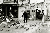 /images/133/1998-12-athens-pigeons.jpg - #00175: The man who owned pigeons in Athens … Jan 1, 1999 -- Athens, Greece