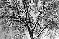 /images/133/1999-02-chicago-trees-bw1.jpg - #00268: a snowy February along Michigan Avenue … Feb 1999 -- Chicago, Illinois
