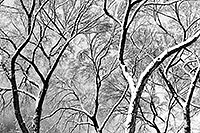 /images/133/1999-02-chicago-trees-bw2.jpg - #00269: a snowy February along Michigan Avenue … Feb 1999 -- Chicago, Illinois