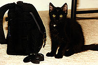 /images/133/1999-07-phoenix1.jpg - #00332: Phoenix (cat) in Phoenix … July 1999 -- Phoenix, Arizona