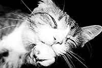 /images/133/1999-09-lance-sleeping-bw1.jpg - Animals > Cats