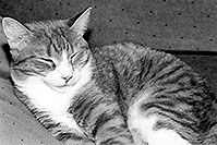 /images/133/1999-09-lance-sleeping-bw2.jpg - #00408: Lance sleeping in Phoenix … Sept 1999 -- Phoenix, Arizona