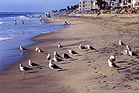 /images/133/2000-02-cali-beach-seagulls1.jpg - #00464: Seagulls in South Carlsbad … Nov 2000 -- South Carlsbad, California