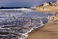 /images/133/2000-02-cali-beach-seagulls2.jpg - #00465: Seagulls in South Carlsbad … Nov 2000 -- South Carlsbad, California