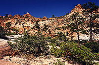 /images/133/2000-04-greater-zion-top1.jpg - #00469: Backpacking with Rakesh … April 2000 -- Greater Zion Wilderness, Utah