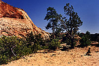 /images/133/2000-04-greater-zion-top2.jpg - #00470: Backpacking with Rakesh … April 2000 -- Greater Zion Wilderness, Utah