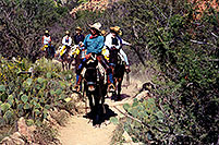 /images/133/2000-08-grand-riders.jpg - #00555: Mule caravan leaving Indian Garden and heading up Bright Angel Trail in Grand Canyon … July 2000 -- Bright Angel Trail, Grand Canyon, Arizona