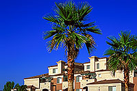 /images/133/2000-08-tempe-apt2.jpg - Special > Palm Trees