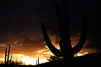 /images/133/2000-08-tucson-storm-cactus.jpg - #00617: monsoon night in Tucson … August 2000 -- Tucson, Arizona