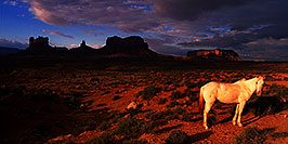 /images/133/2000-09-monvalley-horse-pano.jpg - #00678: Navajo horses at  6am … Sept 2000 -- Monument Valley, Utah