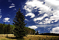 /images/133/2000-09-snowbowl-tree-sky.jpg - #00672: Snowbowl … Sept 2000 -- Snowbowl, Arizona