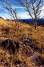 /images/133/2000-10-williams-meadow2-v.jpg - #00694: Fall at Williams … near Flagstaff … March 2000 -- Williams, Arizona