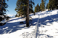 /images/133/2001-01-07-snowcat-tracks-trees.jpg - #00737: morning at 11,500ft … Jan 2001 -- Leadville, Colorado