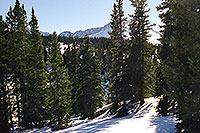 /images/133/2001-01-07-trees-sun-star2.jpg - #00740: morning at 11,500ft … Jan 2001 -- Leadville, Colorado