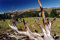 /images/133/2001-07-leadville-no-trees.jpg - #00833: morning at 11,500ft -- Chalk Mountain, Leadville, Colorado