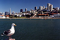 /images/133/2001-07-sfrisco-seagull-city.jpg - #00853: San Francisco harbor … July 2001 -- San Francisco, California