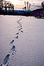 /images/133/2003-02-snowbowl-footsteps-in-snow-v.jpg - #01118: my footprints near Snowbowl, on a late afternoon … Feb 2003 -- Snowbowl, Arizona