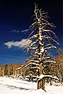 /images/133/2003-02-snowbowl-tree-v.jpg - #01123: Snowbowl in February … Feb 2003 -- Snowbowl, Arizona