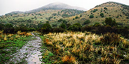 /images/133/2003-03-reavis-rain2-pano.jpg - #01155: wet Reavis Ranch Trail in Superstition Mountains … March 2003 -- Superstitions, Arizona