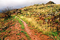 /images/133/2003-03-reavis-rain4.jpg - #01157: wet Reavis Ranch Trail in Superstition Mountains … March 2003 -- Superstitions, Arizona