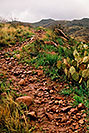 /images/133/2003-03-reavis-trail2-v.jpg - #01160: wet Reavis Ranch Trail in Superstition Mountains … March 2003 -- Superstitions, Arizona