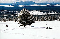 /images/133/2003-03-snowbowl-mobilers1.jpg - #01194: Snowmobilers at Snowbowl … March 2003 -- Snowbowl, Arizona