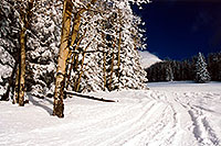 /images/133/2003-03-snowbowl-trees-right.jpg - #01190: Snowbowl … March 2003 -- Snowbowl, Arizona
