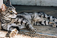 /images/133/2003-05-paravil-cat09.jpg - #01215: The prettiest, friendliest stray cat … May 2003 -- Phoenix, Arizona