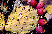 All Cactus Photos on one page