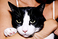 /images/133/2003-08-sonia-tuxedo1.jpg - #01325: Tuxedo cat in Santa Fe … August 2003 -- Santa Fe, New Mexico