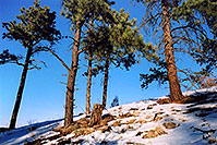 /images/133/2004-04-sedalia-trees-snow.jpg - #01475: views of Sedalia … April 2004 -- Sedalia, Colorado