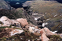 /images/133/2004-06-mtevans-goats2.jpg - #01538: Mountain Goats at Mt Evans … June 2004 -- Mt Evans, Colorado