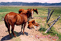 /images/133/2004-07-bryce-horses05.jpg - #01622: horses near Bryce … July 2004 -- Bryce Canyon, Utah