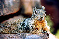 /images/133/2004-07-grand-squirrel4.jpg - Animals > Squirrels