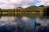 /images/133/2004-07-rocky-lake-ducks.jpg - #01788: ducks at Sprague Lake … July 2004 -- Sprague Lake, Rocky Mountain National Park, Colorado
