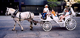 /images/133/2004-08-denver-horse1-2.jpg - #01837: Horse Carriages in Denver … images of Denver  … July 2004 -- Denver, Colorado