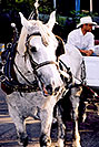 /images/133/2004-08-denver-horse1-v.jpg - #01838: Horse Carriages in Denver … images of Denver  … July 2004 -- Denver, Colorado