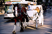 /images/133/2004-08-denver-horse2-1.jpg - 01839: Horse Carriages in Denver … images of Denver  … July 2004 -- Denver, Colorado