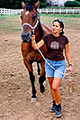 /images/133/2004-08-horses-ola-walking-v.jpg - #01880: Ola in Greenwood Village … August 2004 -- Greenwood Village, Colorado