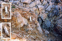 /images/133/2004-08-mountain-goat-wall.jpg - #01918: Mountain Goat running down a rock wall at Mt Evans … August 2004 -- Mt Evans, Colorado