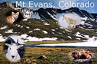 /images/133/2004-08-mt-evans-mtns2-text.jpg - #01922: Mt Evans peaks … view from Summit Lake … August 2004 -- Mt Evans, Colorado