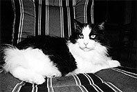 /images/133/2004-08-olas-idgie-bw1.jpg - #01934: Itchie in Greenwood Village … August 2004 -- Greenwood Village, Colorado