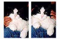 /images/133/2004-09-itchie-ola-sitting1.jpg - #02127: Itchie the cat with Ola … Sept 2004 -- Greenwood Village, Colorado