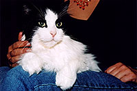 /images/133/2004-09-itchie-ola-sitting2.jpg - #02128: Itchie the cat with Ola … Sept 2004 -- Greenwood Village, Colorado