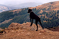 /images/133/2004-09-loveland-dog-view.jpg - #02144: Labrador Retrievers at Loveland Pass … Sept 2004 -- Loveland Pass, Colorado